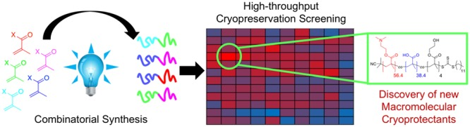 Combinatorial Biomaterials Discovery Strategy to Identify New Macromolecular Cryoprotectants.